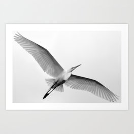 Great White Egret Art Print