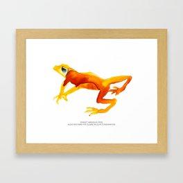 Scarlet Harlequin Frog Framed Art Print