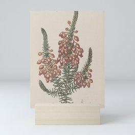 Flower 115 erica ardens Sealing wax Heath20 Mini Art Print