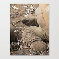 tortoise Canvas Prints featuring Tortoise by Kamero Designs