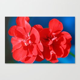 Red garden flowers Canvas Print