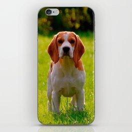 beagle puppy on guard iPhone Skin