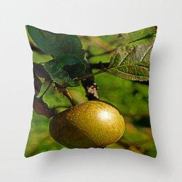 hanging apple Throw Pillow