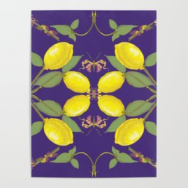 Midnight  butterfly lemon  Poster