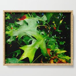 Maple Leaves Changing Color In Autumn Serving Tray