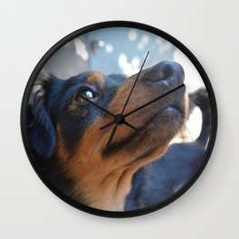 Chalie or Charly is one beatiful dog Wall Clock