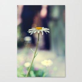 Daisy I Canvas Print