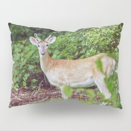 Young Buck in Velvet Pillow Sham