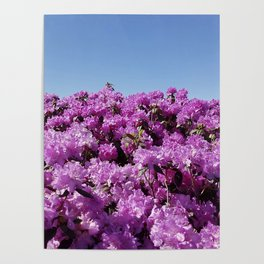 """View of """"Mount Rhodendron"""" on a clear day Poster"""