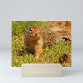 Twitchy Nosed Columbian Ground Squirrel Mini Art Print