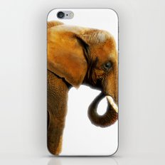 Asian elephant  iPhone & iPod Skin