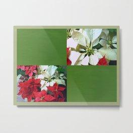 Mixed color Poinsettias 1 Blank Q5F0 Metal Print