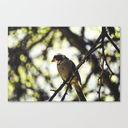 TheBird Canvas Print