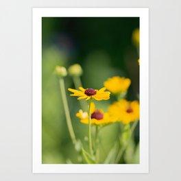 Portrait of a Wildflower in Summer Bloom Art Print