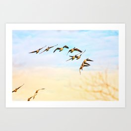 Canadian Geese Art Decor. Art Print