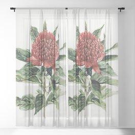 Waratah Flower Sheer Curtain
