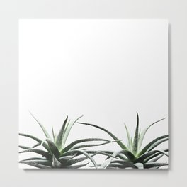 Succulents - Haworthia attenuata - Plant Lover - Botanic Specimens delivering a fresh perspective Metal Print