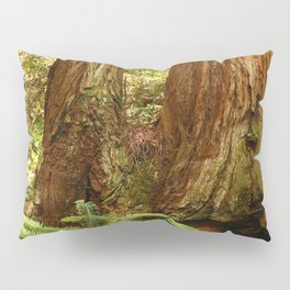 Fern and Sequoia Trunks Pillow Sham