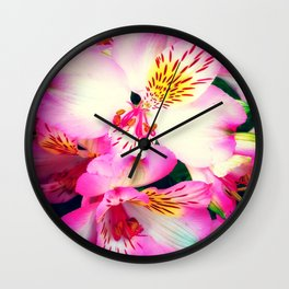 Pink Peruvian Lilies (Alstroemeria) in Bloom Wall Clock