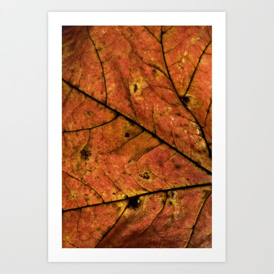 Fall Leaf III Art Print