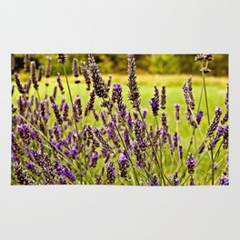 Magic Lavender Rug