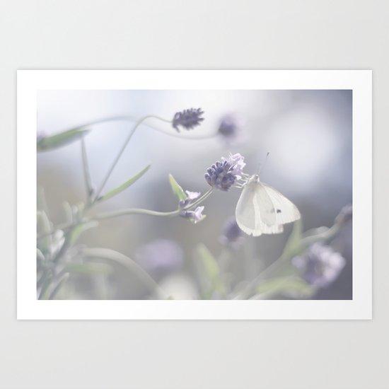 Lavender loving butterfly Art Print