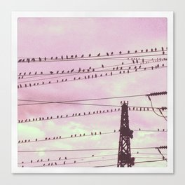 The flock watchs the sunset Canvas Print