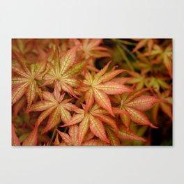 Peaches & Cream Japanese Maple Fine Art Print, Botanical Art, Leaf Texture Canvas Print