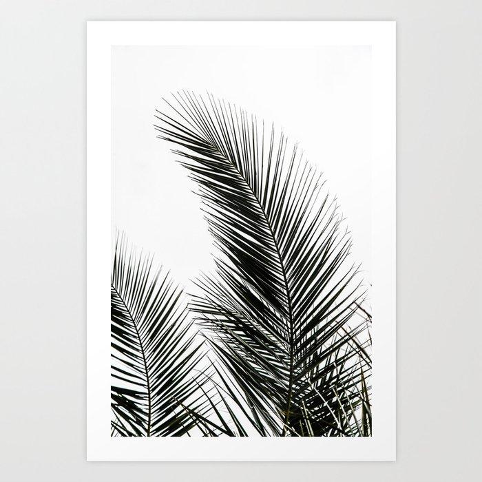 Palm Leaves Kunstdrucke