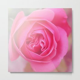 *Pinklight - Rose I Metal Print