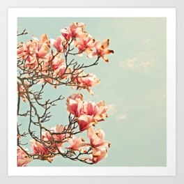 Pink Magnolia Blossoms in Spring Art Print
