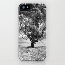 The Noble Gum Tree iPhone Case