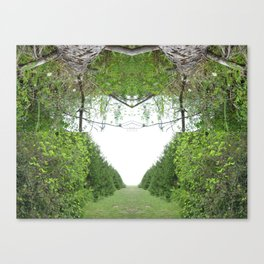 Espiritu - 113 Canvas Print