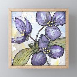 Spiderwort Prairie Plant Framed Mini Art Print