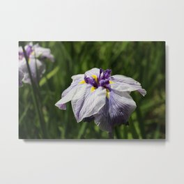 The lonesome flower Metal Print