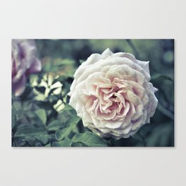 Roses are pink. Canvas Print