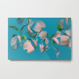 Dogwood Tree Flowers (aqua background) Metal Print