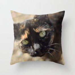 A wild calico Throw Pillow