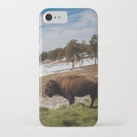 bison iPhone & iPod Cases featuring Bison by Mikey Price