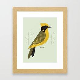 Helmeted Honeyeater, Bird of Australia Framed Art Print