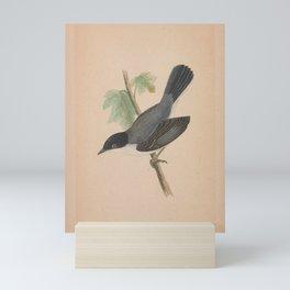 Sardinian Warbler Mini Art Print