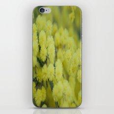 Silver Wattle iPhone & iPod Skin