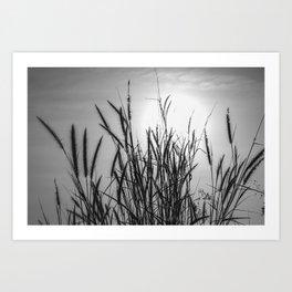 Pampas grass sunset Art Print
