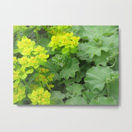 Euphorbia & Lady's Mantle Metal Print