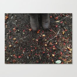 Fall colours in Summer Canvas Print
