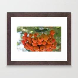 Orange Berries Framed Art Print