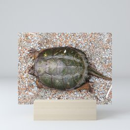 Snapping Turtle2-from the top Mini Art Print