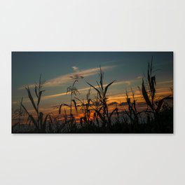 Maizen in the sunset Canvas Print