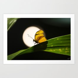 Butterfly and the Moon Art Print