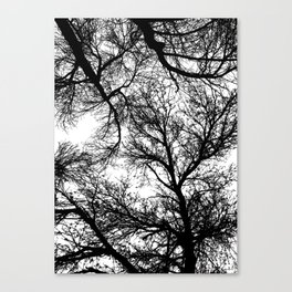 Branches 4 Canvas Print